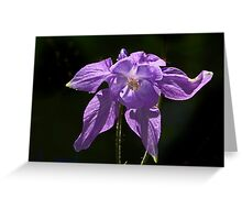 Purple Columbine Greeting Card