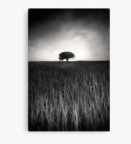 Monochrome Vision Canvas Print