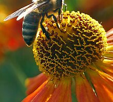 Summer buzz by Denise Couturier