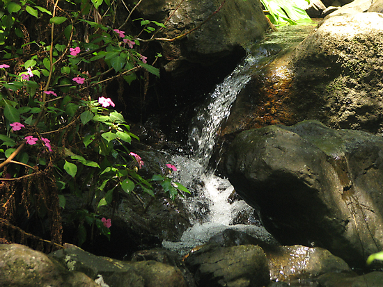 Waterfall with Pink Flowers at El Yunque (light) by Matt Ravick
