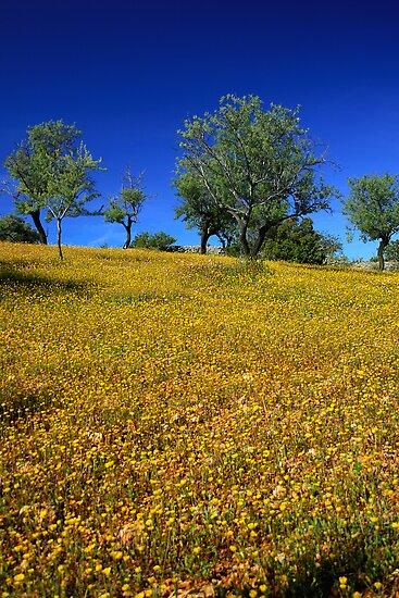 Field of Gold by Steve Woods