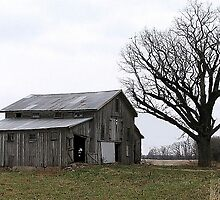 Barn 1218 by Judy Seltenright
