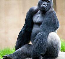 Big Guy by anna mark