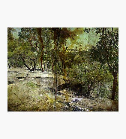 Springwood Photographic Print