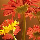 Florals by deb cole