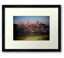 Evening Blossom One Framed Print