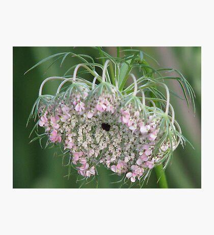 wild weed Photographic Print