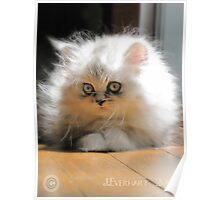 Daydream Kitten Poster