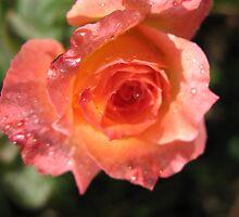 Cantaloupe Rose by MarianBendeth