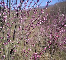 and when the redbud blooms in the spring , he will come.  by Ann Eldridge