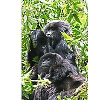 Relax and a bite to eat Gorilla style Photographic Print