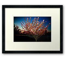 Evening Blossom Two Framed Print