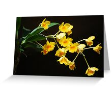 Dendrobium chrysotoxum Greeting Card