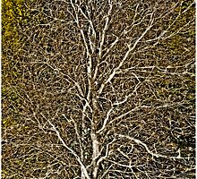 Vermont Tree by Mark Ross