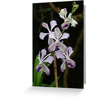Dendrobium Greeting Card