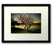 Evening Blossom Three Framed Print