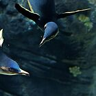 Confusion Among Penguins by Brendan Henry