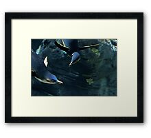 Confusion Among Penguins Framed Print