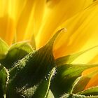 Sunflower by Terri~Lynn Bealle