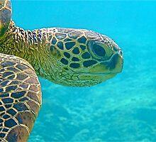 Eye of a Turtle by Kaukahi