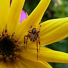 Sunflower and Spider by AnnDixon