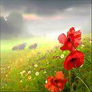 Red Poppies by Igor Zenin
