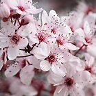 spring blossoms by joeven