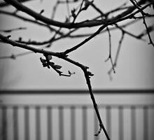 Veins by Elvira Leone