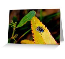 Jumping-Spider jewel Greeting Card