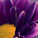 Harmony by Angela  Ardis