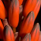 Cactus Flower by SusanAdey
