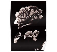 Wild as a rose solarised Poster