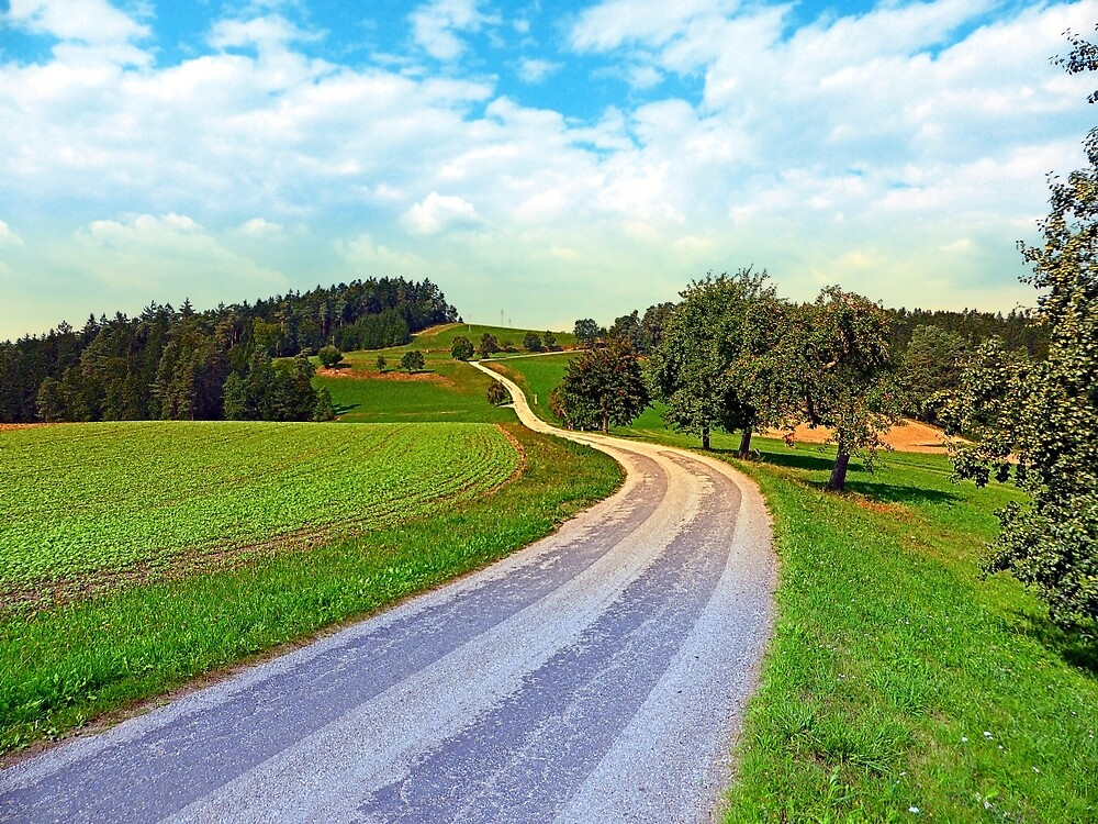 Apple trees along the country road   landscape photography by Patrick Jobst