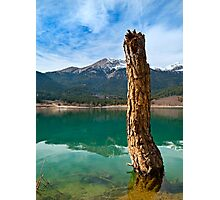 Dead tree Photographic Print