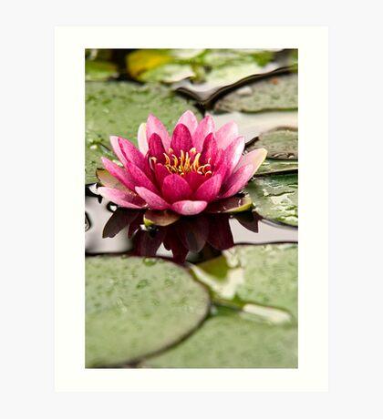 Lotus Blossom - Dali, China Art Print