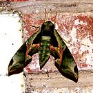 Camouflage Moth On Red Brick by Jonathan  Green