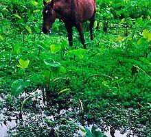 Horse and Taro - Waipio, Hawaii by Alex Zuccarelli