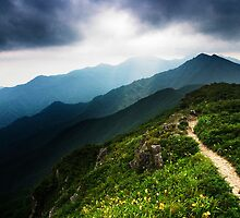 Ridge Path - Deogyusan National Park, South Korea by Alex Zuccarelli