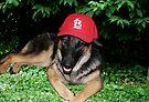 Indy - Baseball Fan by Sandy Keeton