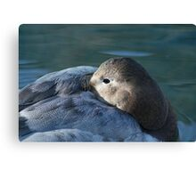 Resting at the Green Bay Wildlife Sanctuary Canvas Print