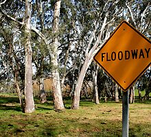 White Gums IV (Floodway) by Stephen Mitchell