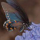 Palamedes Swallowtail by loiteke