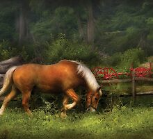 In the Meadow by Mike  Savad