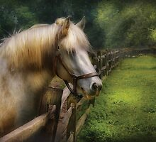 White Stallion by Mike  Savad