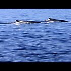 Humpback Gliders by jenndes