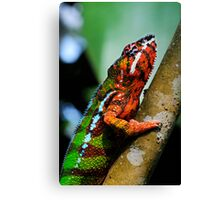 Panther Cameleon Canvas Print