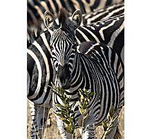 Zebra Stripe Confusion Photographic Print