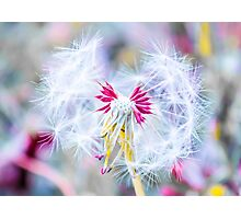 Magic in Pink Photographic Print