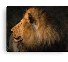 Male Lion Portrait - Night Canvas Print