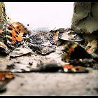 Aglais Urticae  by Imago-Mortis